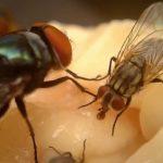flie-removal-pest-control-birmingham