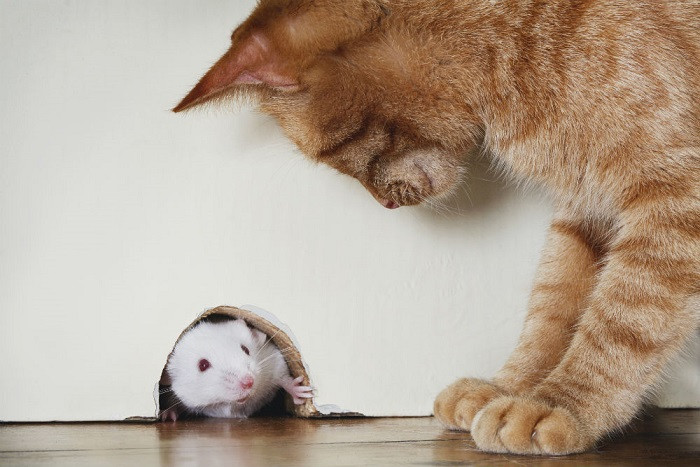 3 Helpful Tips on Getting Rid of Mice in Your Home